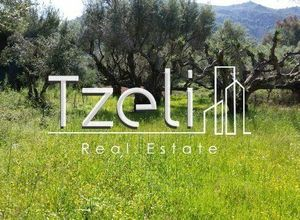 Rent, Land Plot, T.E.I. (Patra)