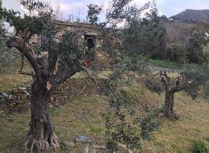 Διαμέρισμα προς πώληση Καλύβια (Κάρυστος) 175 τ.μ. 2 Υπνοδωμάτια