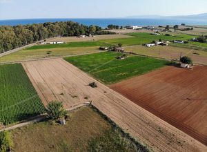 Sale, Land Plot, Agios Konstantinos (Messini)