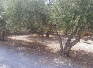 Sale, Land Plot, Giofirakia (Heraclion Cretes)