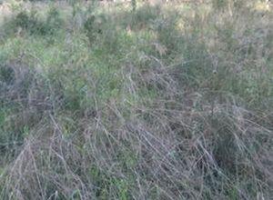 Land Plot, Kato Kifisia