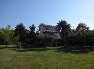 Island Polychrono real estate